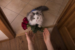 Cat brought roses as a gift to his mom Stock Image