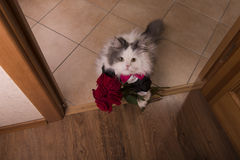 Cat brought roses as a gift to his mom Royalty Free Stock Images