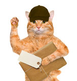 Cat with brown paper parcels delivery . Royalty Free Stock Images