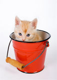 Cat in a bucket royalty free stock photo