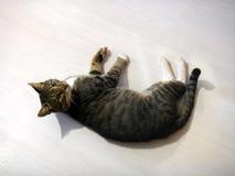 Cat Bucks Lizenzfreies Stockbild