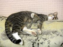 Cat Bucks Stockbilder