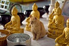 Cat Buddhist. Among a Deity Stock Image