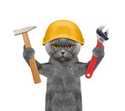 Cat builder holding tools in its paws Royalty Free Stock Images