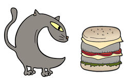 Cat and burger Stock Photos