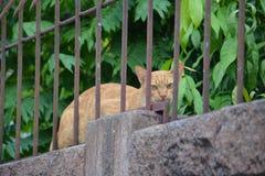 Cat Burglar Imagem de Stock Royalty Free