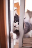 Cat burglars Stock Photo