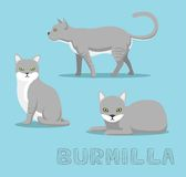Cat Burmilla Cartoon Vector Illustration Royalty-vrije Stock Afbeeldingen