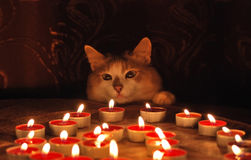 Cat and burning candles Stock Images