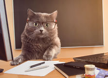 Cat businessman with glasses at the table. Cat businessman at a table near the laptop with glasses royalty free stock photography