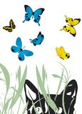 Cat and butterflies Royalty Free Stock Images