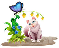 Cat and butterfly Stock Photos