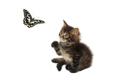 Cat and butterfly Stock Photo
