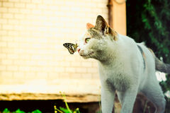 Cat and butterfly playing together in the garden Royalty Free Stock Photo