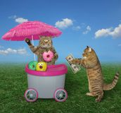 Cat buys donuts in the park stock image