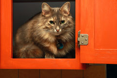 Cat in the cabinet Royalty Free Stock Photography