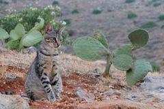 Cat cactus Stock Images