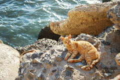 Cat in Cadiz Stock Photos