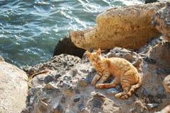 Cat in Cadiz. Cat in beach (Cadiz Andalusia Stock Photos