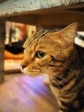 Cat. At cat cafe Stock Photo