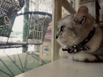 Cat. At cat cafe Royalty Free Stock Images