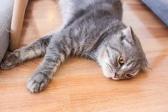Cat Cafe Photographie stock libre de droits
