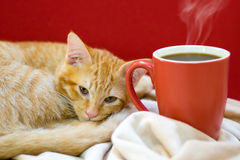 Cat cafe, a cat with a cup of coffee Royalty Free Stock Images
