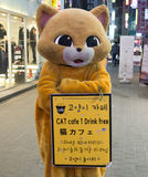 Cat Cafe em Seoul, Coreia do Sul fotografia de stock royalty free