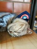 Sleep cat. Cat cafe with a lot of cats Royalty Free Stock Photography
