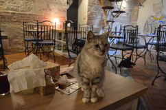Cat caffe in Prague. Funny cat in caffe in Prague royalty free stock images