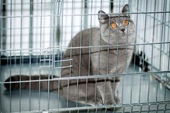 A cat in a cage Royalty Free Stock Photos