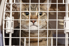 Cat in a cage Royalty Free Stock Images