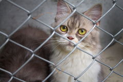 Cat in a cage stock photography