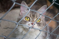 Cat in a cage Stock Photo
