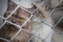Cat in a cage Royalty Free Stock Photo