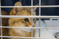 Cat in cage Royalty Free Stock Images