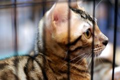 Cat in cage royalty free stock photography