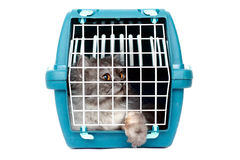 Cat in cage carrier. Cat in transport box on clean white background Stock Photography