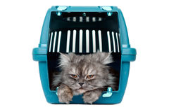 Cat in cage carrier. Cat in transport box on clean white background Royalty Free Stock Images