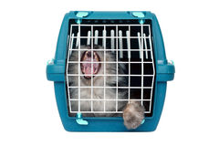 Cat in cage carrier Royalty Free Stock Photos