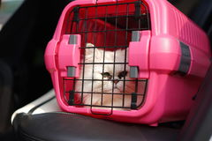 Cat in Cage Carrier. Cat in transport box on the ground Royalty Free Stock Photos