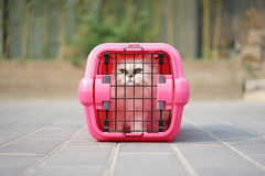 Cat in Cage Carrier royalty free stock image