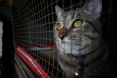 Cat in cage - Cruelty to animals. Cat in cage on black background - Cruelty to animals royalty free stock photos