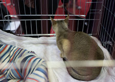 Cat in the cage at exhibition of cats Royalty Free Stock Images