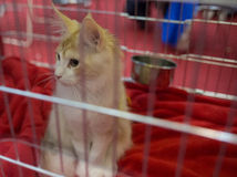A cat in a cage at an interational cat exibition Stock Photos