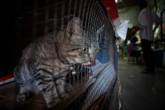Cat in cage - Cruelty to animals. Cat in cage on Pet shop background - Cruelty to animals royalty free stock images