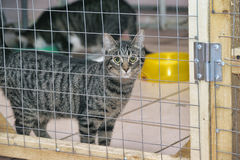 Cat in a cage Stock Images