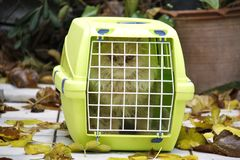 Cat in a cage on the street in the middle of the yellow leaves royalty free stock image