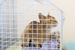 Cat in cage Stock Images