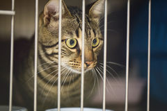 Cat in a Cage at a Vet Clinic. A sick cat in a metal cage of a vet clinic Royalty Free Stock Image